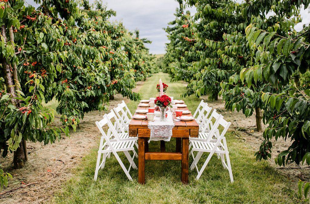 Styled Shooting: Freie Trauung unter Kirschbäumen